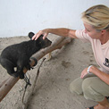 Ro London, Asiatic Black bear cub at Kuang Xi Bear Rehabilitation Centre in Laos during