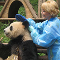 Ro London - Giant Panda washing time!