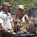 Ro London - Moholoholo is a haven for the rehabilitation and care of injured and poisoned wildlife, Limpopo Province, South Africa.